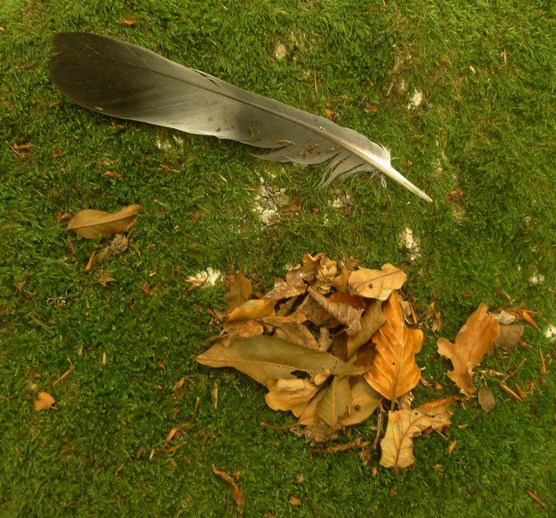 Feather & Leaf
