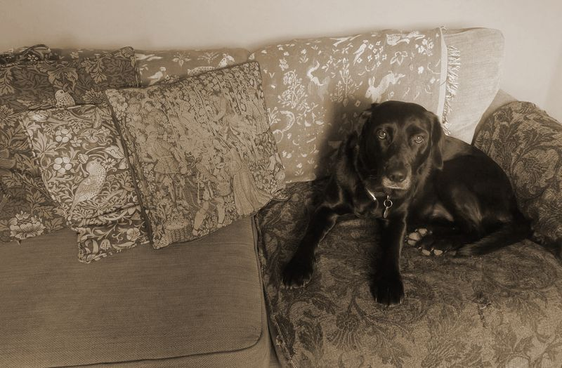 Tilly at home, 2