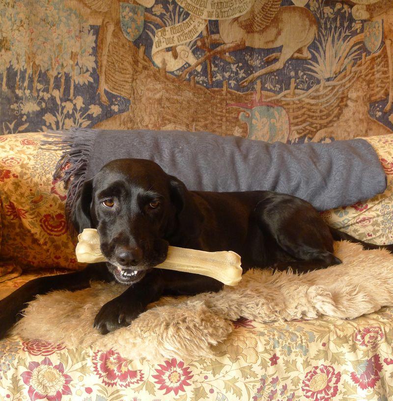 Birthday bone