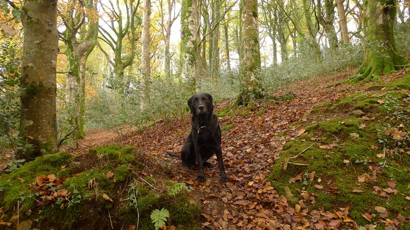 Devon woods