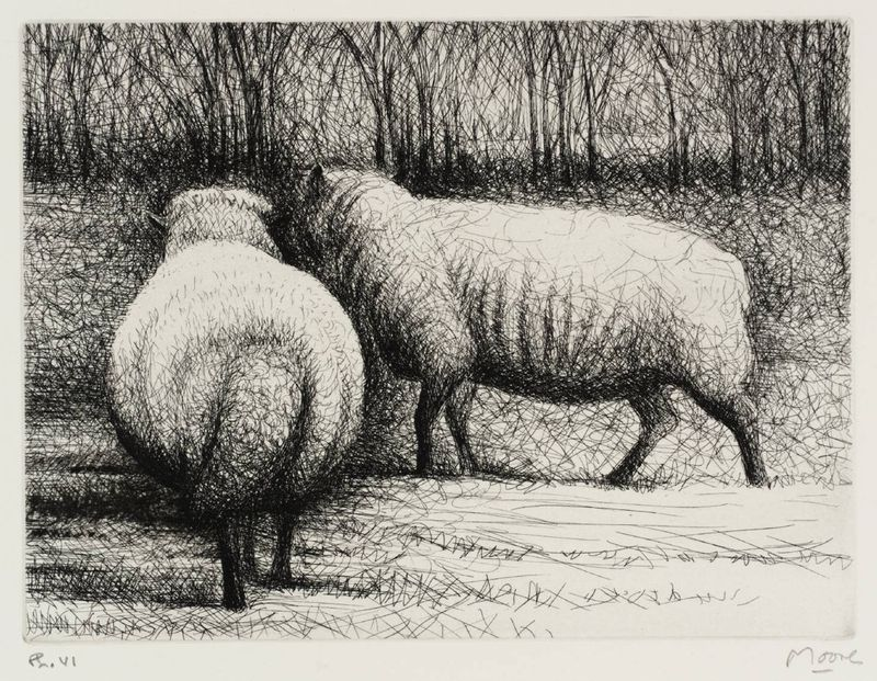 Sheep etching by Henry Moore