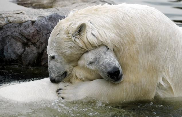 Bear Mates